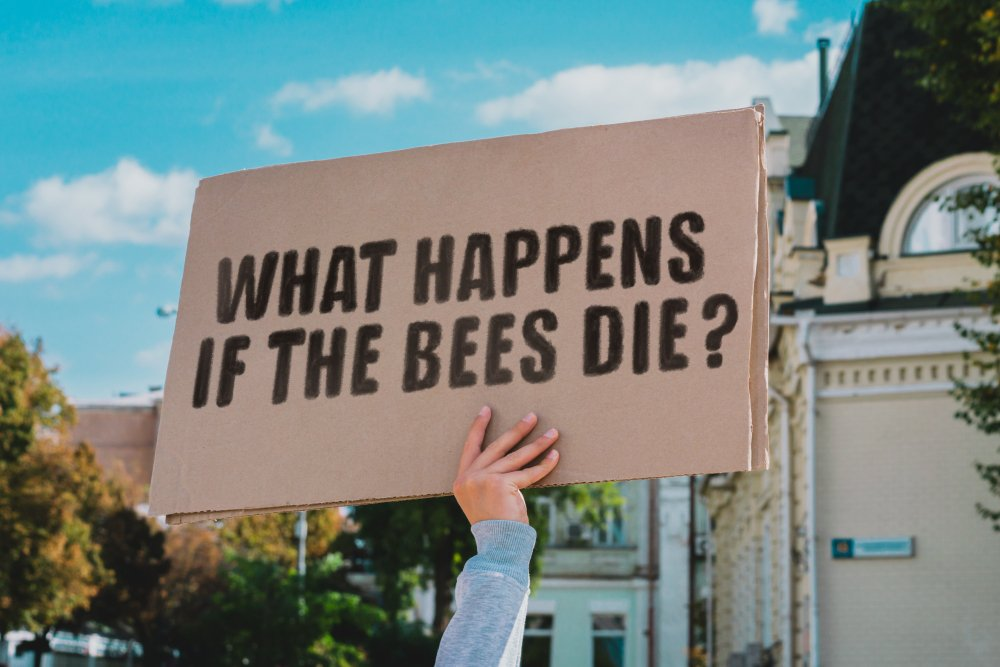 Why bees are important