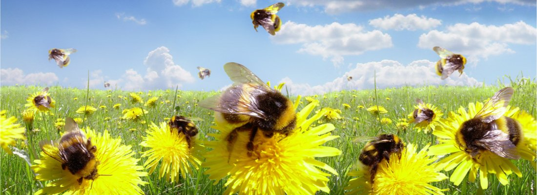 UK Bumblebee Species